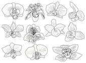 Eleven black orchid flowers sketches — Stock Vector