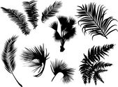 Palm and fern leaves silhouettes isolated on white — ストックベクタ