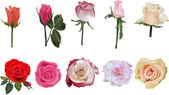 Five rose flowers with buds on white — Stock Vector