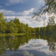 Clouds and trees reflection in pond — Stock Photo #6260320