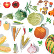 Set of vegetables with shadows — Stock Vector #6329397