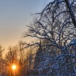 Sunset between snow branches — Stock Photo #6415490
