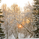 Sunset between snow firs — Stock Photo #6651780