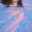 Sunset with two pines and steps on snow — Stock Photo #6785442