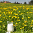 Jug of milk on meadow. Emmental region, Switzerland — Foto Stock #20808745