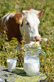 Swiss cow and jug of milk — Stock Photo