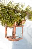 Lantaarn op de vuren tak — Stockfoto