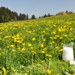 Jug of milk on meadow. Emmental region, Switzerland — Foto Stock #20842285