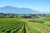 Vineyards near Montreux, Switzerland — Stock Photo