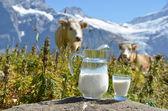 Jug of milk against herd of cows. Switzerland — Stock Photo