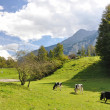 Stock Photo: Swiss scenery
