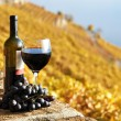 Stock Photo: Red wine and grapes on the terrace of vineyard in Lavaux region,