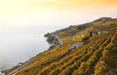 Vineyards in Lavaux region, Switzerland — Stock Photo