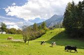 Swiss scenery — Stock Photo