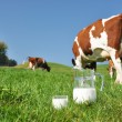 Cow and jug of milk. Emmental region, Switzerland — Stock Photo #20935705