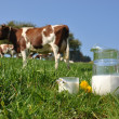 Jug of milk against herd of cows. Emmental region, Switzerland — Stock Photo #20935721