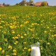 Jug of milk on the meadow. Emmental region, Switzerland — Stock Photo
