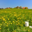 Jug of milk on meadow. Emmental region, Switzerland — Foto Stock #20935819