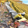 Wine, grapes and cheese against vineyards in Lavaux region, Swit — Stock Photo #20938293
