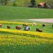 Spring in Emmen valley (Emmental), Switzerland — Stock fotografie #20938525