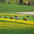 Foto Stock: Spring in Emmen valley (Emmental), Switzerland