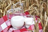 Jug of milk among wheat ears — Stock Photo