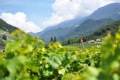 Scenic vineyards, Switzerland — Stock Photo