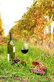 Bottle and wineglass among vineyards in Lavaux region, Switzerla — Stock Photo