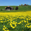 Scenic meadow in Emmental region, Switzerland — Stok Fotoğraf #21001683