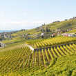 Vineyards in Lavaux region at Geneva lake, Switzerland - Stock Photo