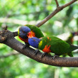 Stock Photo: Pair of kissing parrots