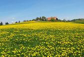 Jaro v ementálu, švýcarsko — Stock fotografie