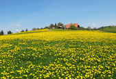 Spring in Emmental, Switzerland — Foto de Stock