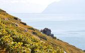 Vineyards in Lavaux, Switzerland — Stock Photo
