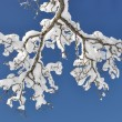 Snow on the branch — Stock Photo
