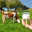 Glass of milk against herd of cows. Emmental region, Switzerland — Stock Photo #21018261