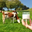 Glass of milk against herd of cows. Emmental region, Switzerland — Stockfoto #21018261