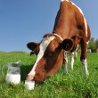 图库照片: Cow and jug of milk. Emmental region, Switzerland