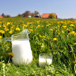 Jug of milk on spring meadow. Emmental region, Switzerland — Foto Stock #21018703