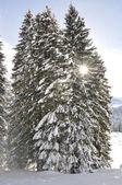 Majestätischen alpen anzeigen — Stockfoto