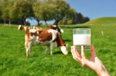 Glass of milk against herd of cows. Emmental region, Switzerland — Stock Photo