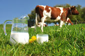 Jug of milk against herd of cows. Emmental region, Switzerland — Stock Photo
