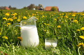 Jug of milk on the spring meadow — Stock Photo