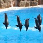 Dolphin show — Stock Photo #21033319