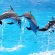 Dolphins — Stock Photo #21033339