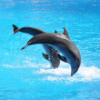 Stock Photo: Pair of dolphins