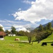 Stock Photo: Swiss country side scenery