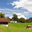 traditional swiss farm house — Stock Photo #21036819
