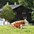 traditional swiss farm house — Stock Photo #21037179