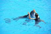 Dolphin show — Stock Photo